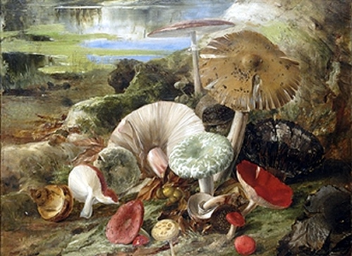 A Troop of Mushrooms and Toadstools