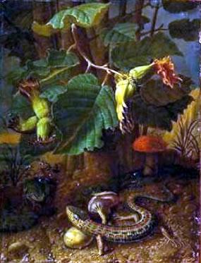 Johann Adalbert Angermeyer, Lizard and a Tree Frog